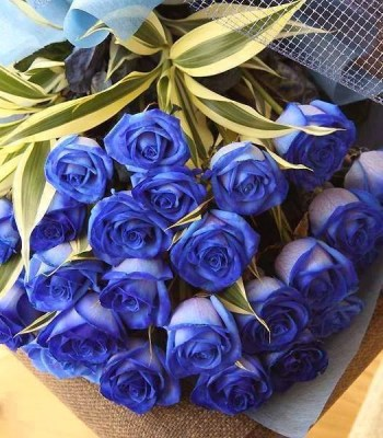 15blue-roses